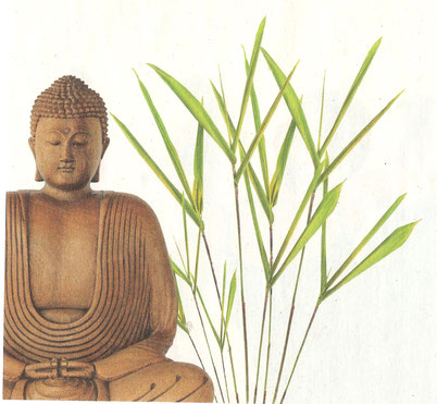 Meditation Michaela Hold München Yin Yoga Holistic Pulsing Ausbildung Kartenlegen Familienaufstellung