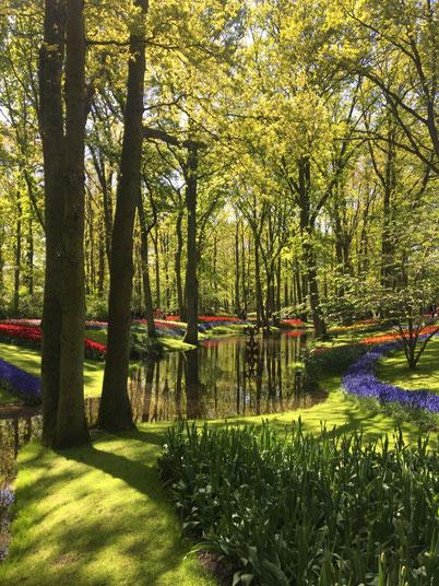 keukenhof garen, giardino di tulipani colorati tra corsi d'acqua e alberi