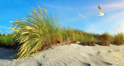 Strand mit Dünen und Möwe