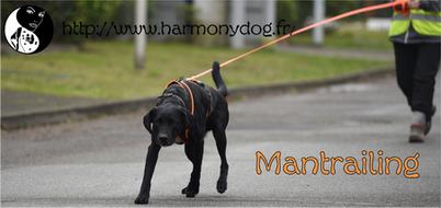 mantrailing, pistage chien, Paris, Annecy