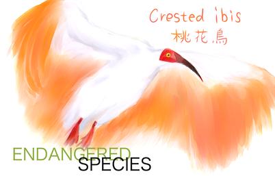 学名「Nipponia nippon」。『日本書紀』『万葉集』では漢字で「桃花鳥」と記されている。全長約80cm。翼開長時は約130cm。春から夏にかけての翼の下面は朱色がかった濃いピンク色をしており、日本ではこれを「とき色」(朱鷺色)という。 1934年12月28日に天然記念物、1952年3月29日に特別天然記念物に指定された。 肉や羽毛を取る目的での乱獲や農薬による獲物の減少などが要因で生息数が減少し、 日本では野生のトキは絶滅したとされる。