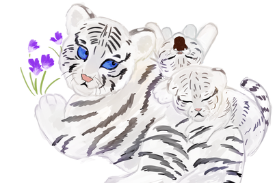 「ホワイトタイガー」ホワイトタイガーは独立した種ではなく、ベンガルトラの白変種。  インドでは古くから神聖な生き物として崇められてきた。  野生のホワイトタイガーは、1951年にインドで捕獲されたのを最後に未だ確認されていない。  動物園や保護施設にいるホワイトタイガーは全世界で約250頭、日本にはこのうちの30頭ほどしかいない希少種である。  野生のトラは、現在約4000頭前後と推定されており、ベンガルトラを含むトラの亜種9種すべてが絶滅危惧種や近絶滅危惧種に指定されている。