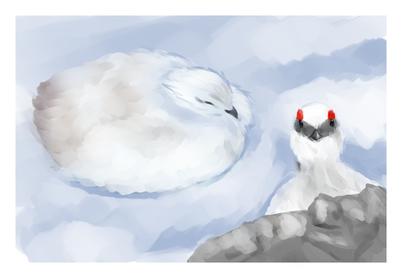 「ライチョウ」 氷河期からの貴重な生き残りであり、特別天然記念物。  主に標高約2,000メートル以上の高山帯に生息している。  夏は白黒茶の斑模様・冬はほぼ全身純白となり、季節によって羽毛の色が変化する。  爪を除く脚全体があたたかい羽毛で覆われている。この特徴を持つキジ類は他にいない。  オスの目の上には赤色の肉冠がある。