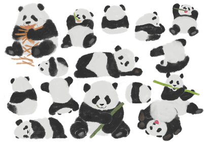 「ジャイアントパンダ」中国名:大熊猫  パンダといえば中国だが、中国全土ではなく四川省などの一部の地域に生息している。  可愛らしい見た目と行動で大人気のパンダ。  今現在、日本では以下の3つの施設で会うことができる。  上野動物園(東京都台東区) アドベンチャーワールド(和歌山県白浜町) 王子動物園(兵庫県神戸市)  尾は黒ではなく白。 「第六の指」と呼ばれる突起を持ち、竹などをつかんで食べることができる。 単独行動を好み、縄張り意識が強い。冬眠はしない。