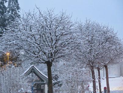 13. Januar 2017 - Winter