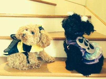 Molly et Sissi déguisés pour l'hallowen