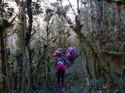 Rando découverte de Randos Canetoise du 30 janvier 2018 de Corsavy vers la forêt de lichens
