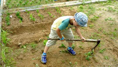 ナゼか? 鍬(くわ)で耕すのに興味を持ち、一人でモクモクと実習(年長くん)