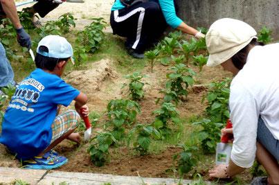 ママといっしょに、花壇の草引きのお手伝い(小1くん)