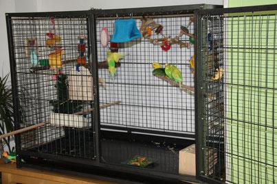 Aménagement d'une cage toujours ouverte de Perruches Ondulées