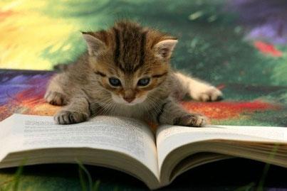Katzen Adoption Gästebuch