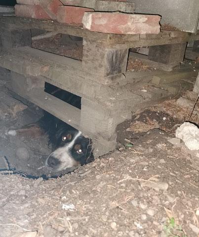 Iffi in der Höhle