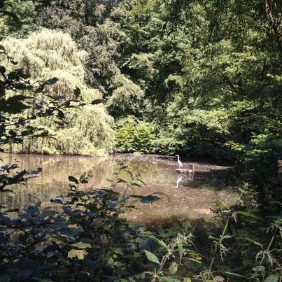 Auf diesem Foto könnt ihr mal bestaunen, was die Wälder am Neroberg so alles zu bieten haben (hab ich in der Vorwoche geschossen)