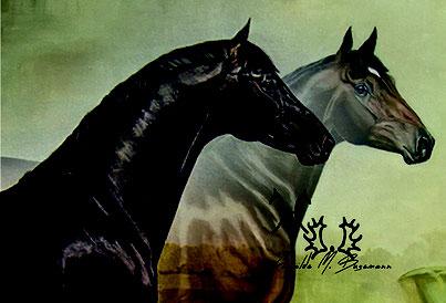 Dressurpferde Verkaufspferde Turnierpferde Dressur Nachwuchspferde Fohlen Zucht Hengst Besamungsstation Meyerhof