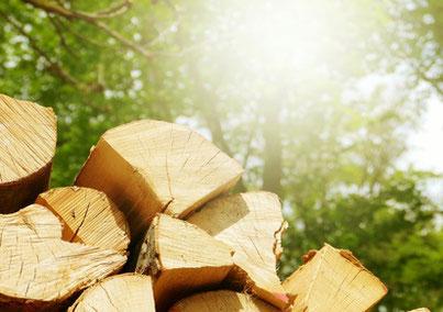 Waldfrisches Holz