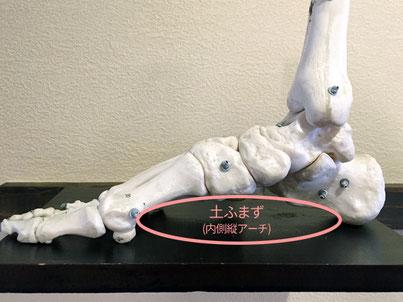 土ふまずと呼ばれている部分に骨はありません
