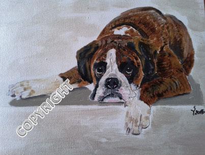 Hundeporträt, Acryl auf Leinwand, 25x30 cm, Fotovorlage: © DoraZett, Fotalia. Ganzkörperporträt eines braunen Boxers. Der Hunde liegt und schaut den Betrachter an. Der Kopf liegt zwischen den Vorderpfoten. Blesse und Pfoten sind weiß.