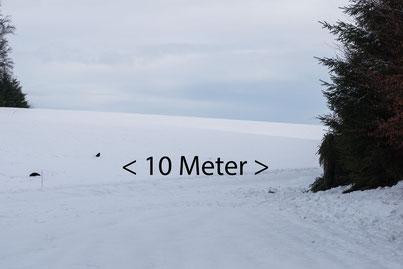 Die Entfernung der Lockkrähen zum Tarnschirm