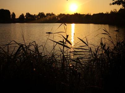 Bejagung am Schlafbaum bei Sonnenuntergang