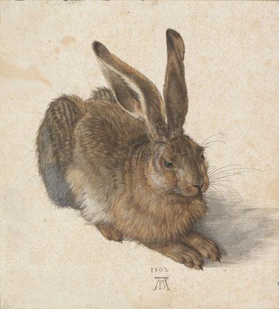 Feldhase Albrecht Dürer