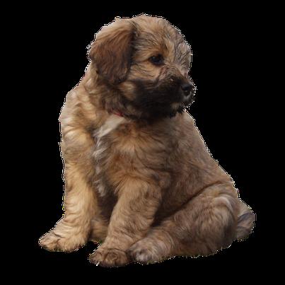 Hundeschule Bremen - Ihre Hundeschule MOMO in Bremen - Preise