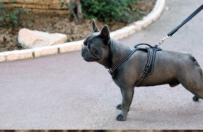 Trotz gespannter Leine, kann sich dieser Hund in der Halsregion frei bewegen und umschauen. Die Schulterpartie ist frei, Schnallen und der Ring für den Karabiner ist unterfüttert.