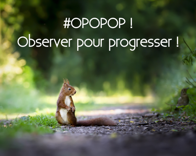 Ecureuil - observer pour progresser - Crédits Pixabay