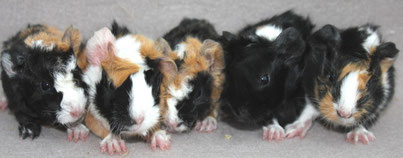 Riciolina, Uma, Ada, Lou und Pearl - weil sie das Ebenbild von Cuôrina ist
