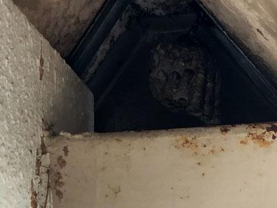 車のガレージに蜂の巣を発見して退治しました。