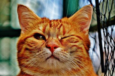Katzenfutter und Zubehör in Rath/Anhoven