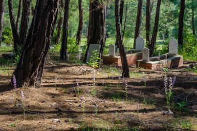 Friedhof mit großem Bestand an Kurdischen Waldvögelein