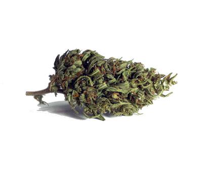 Eletta Campana - Cannabis light