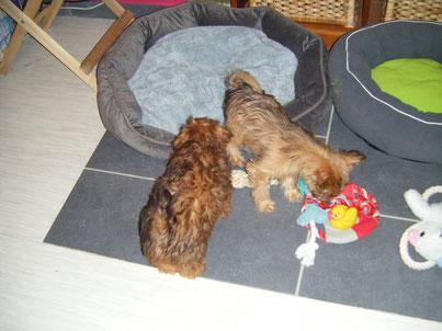 Boubou et Gaya