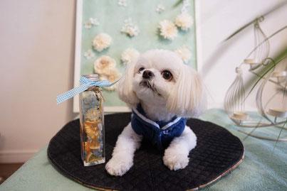 犬連れ ワークショップ ハーバリウム