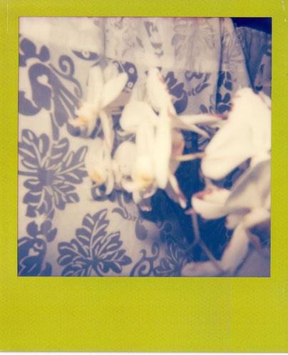 Meine Orchideen, die jetzt schon zwei Monate überlebt haben. Ein richtiges Wunder! ;-)