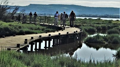 Rando Plaisir de Randos Canétoises au départ de Bages entre étang , bois et vignes le 08 juin 2018