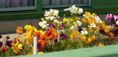 武田さんのお庭に、咲き乱れるお花たち(4月)