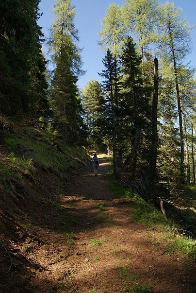 Aufstieg am Knappenweg im Wald