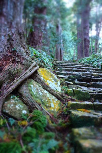 Nachi-no-taki Wasserfall Japan Schrein Tempel Wakayama Pilgerweg Reisebericht Blog