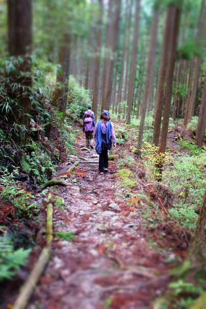 Japan Kumano Kodo Pilgerweg Wandertoute