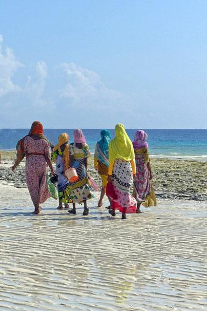 Sansibar Seegrass Sammlerinnen am Strand