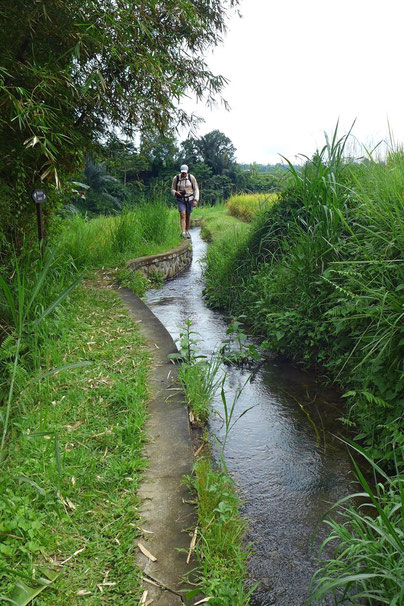 Wandern durch die Jatiluwih Reisterrassen Bali