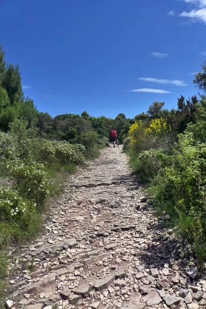 Fahrradfahren Wandern Kap Kamenjak