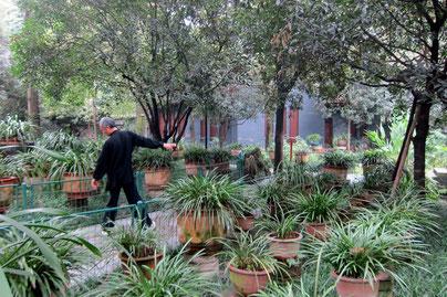 People's Park, Renmin Park Chengdu