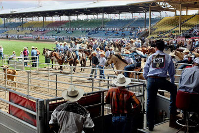 Calf Roping Cowboys at Pendleton Roundup Rodeo