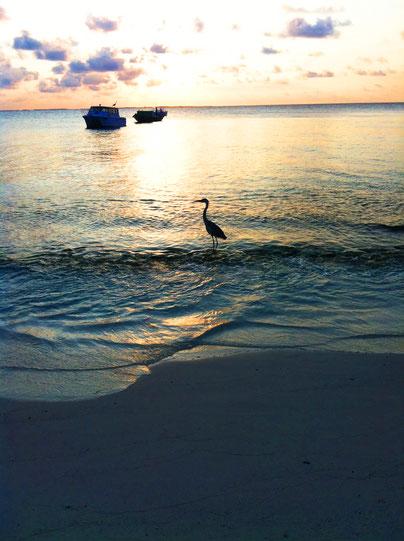 abendstimmung-malediven