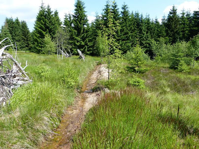Hochmoor-Bläuling Plebejus optilete in Sachsen Tagfalter Pollrich