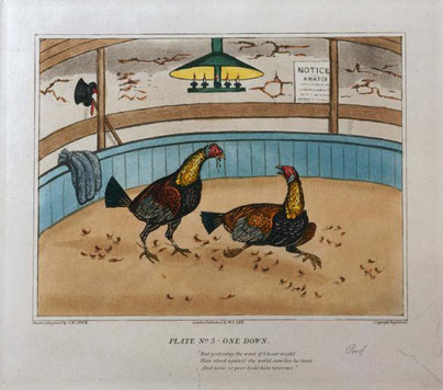 Cock fighting print Welsh folk art