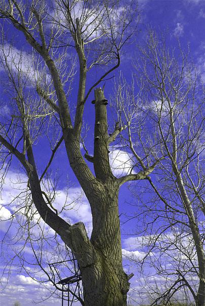 Wolke im Baum gefangen