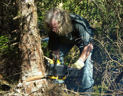 Unterwegs mit Motorsäge statt Kamera (Habitatpflege)
